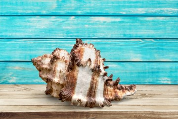 Shell. Seashell collection isolated on the white background