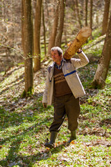 Senior woodcutter with heavy log on shoulder