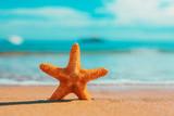 big big orange starfish on the seashore.  summer concept. - Fine Art prints