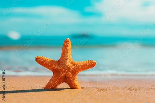 big big orange starfish on the seashore.  summer concept. - 81574680