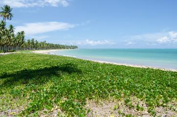 Patacho beach, Brazil
