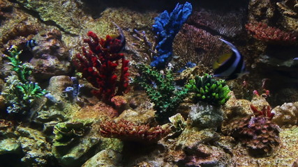 Bright colored fish in a coral reef
