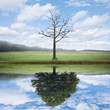 Reflection of old and new tree. - 81577407