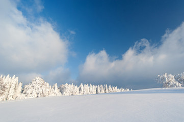 Winter in the Black Forest