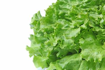Détail salade batavia