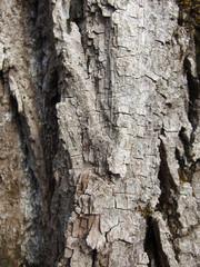 Baumholzrinde