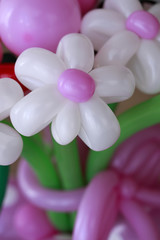 Bouquet of balloon flowers
