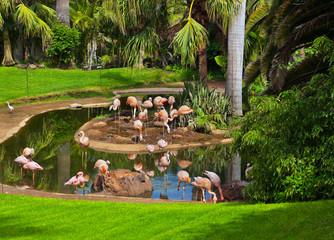Pink flamingo in park