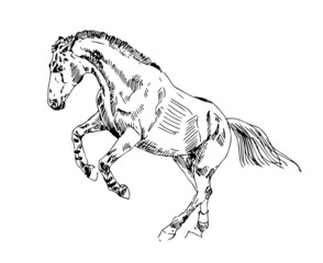 sketch horse play vector