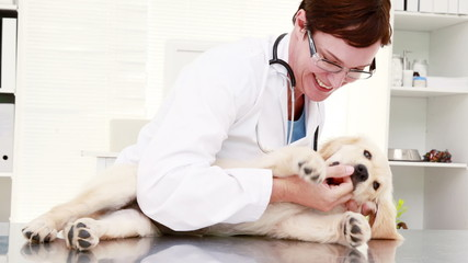 Smiling female vet playing with cute puppy