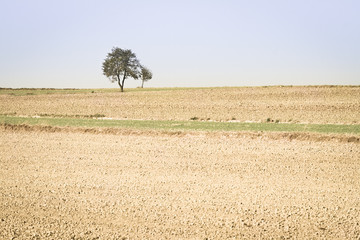 Spring agricultural fields with small  green plants and fallow p