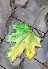 Autumn maple fallen leaf on asphalt