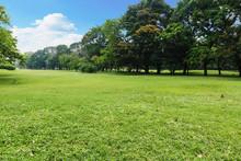 "Постер, картина, фотообои ""Landscape lawn in the park"""