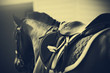 Saddle with stirrups on a back of a horse - 81588434