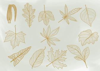 Line leaves.