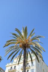 Palme nach dem Karneval