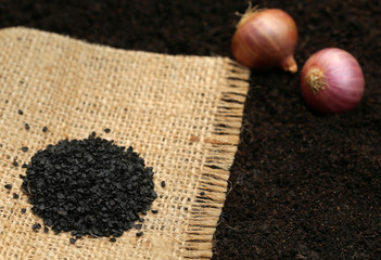 Onion seeds before planting in soil