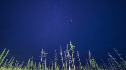 Night timelapse, sky, clouds, stars, trees