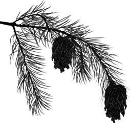 pine tree black branch with cones illustration