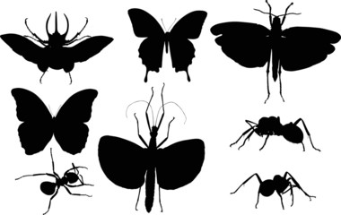 eight isolated black insects