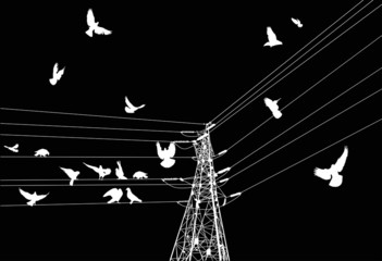 electrical pylon and birds isolated on black