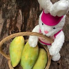 rabbit with mango