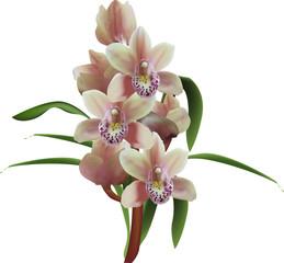 light brown ochis flowers on white