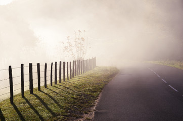 Country road in the fog