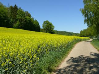 Weg am Rapsfeld