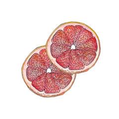 Red Grapefruit illustration