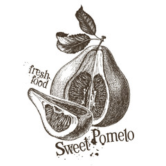 pomelo vector logo design template. fresh fruit, food or