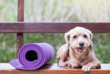 Dog lies down beside yoga mat
