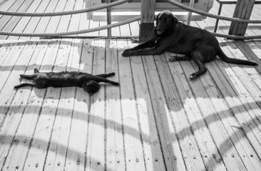 Black homeless cat and dog are resting in the shadow