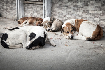 Group of homeless dogs sleeping on the street