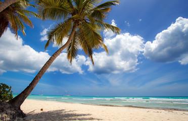 Spiaggia di Samoa, Santo Domingo