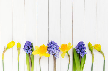 Hyacinth and narcissus over white wooden background