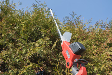 Cutting Thuja by electric fence scissors.