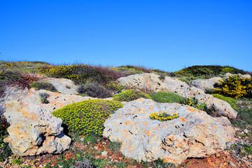 Taranto - Terreno roccioso