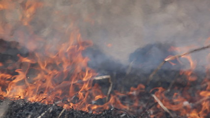 Burning dry grass - reason of forest fires. Fire close up.