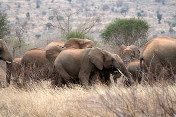 Famille éléphants à Tsavo