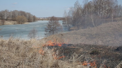 Dry grass burns on a strong wind, on the back plan wood