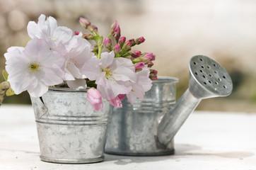 fleurs de cerisier dans petit pot et arrosoir en métal