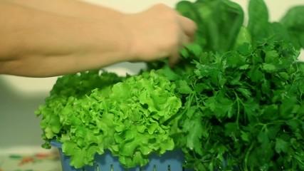 Woman Preparing a Basket of Green Lettuce