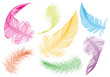 colorful feathers, vector set - 81616824