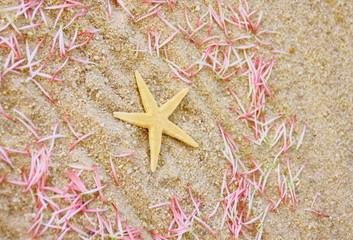 étoile de mer sur sable et pétales