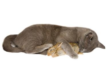 Micio abbraccia un cucciolo di coniglio