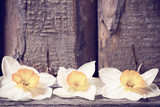 Fototapeta spring flowers on wooden background