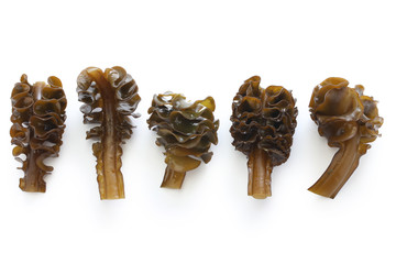 japanese seaweed, mekabu, wakame root on white background