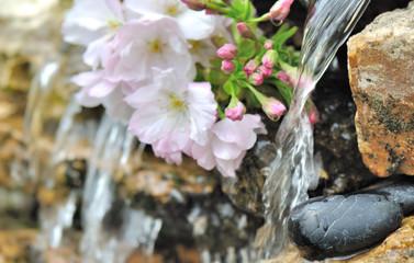 fleurs de cerisier près de l'eau d'un bassin