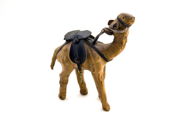 camel in harness on a white background